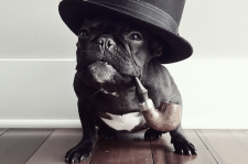 bulldog.reporter